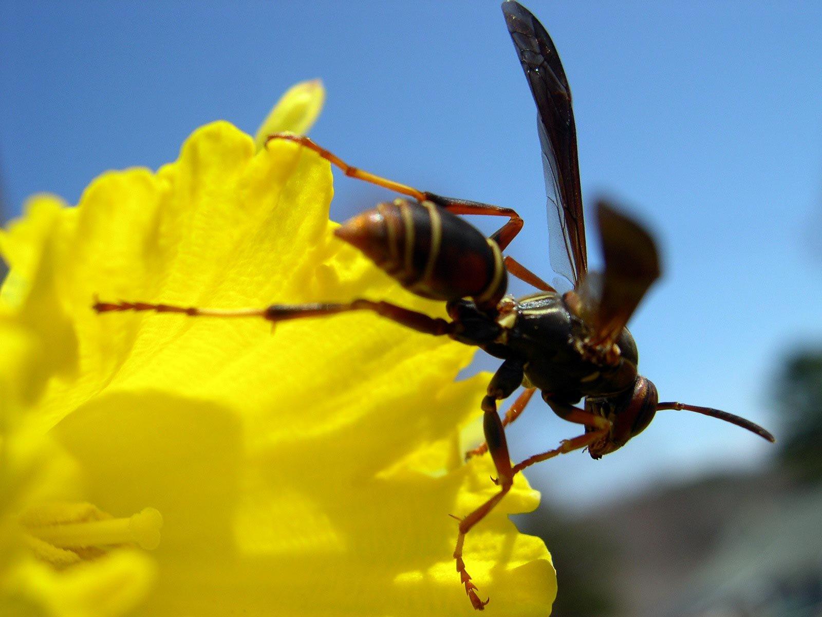 1149_00174_wasp