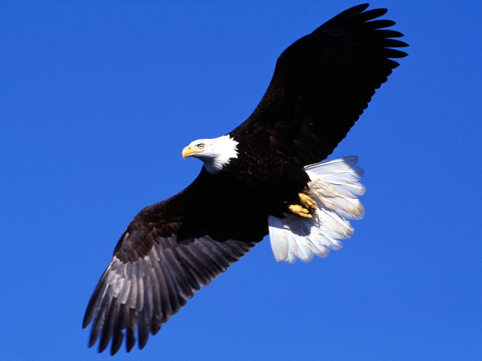 kartinki24_birds_eagles_0006