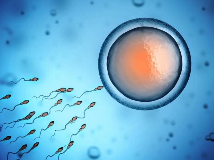 Оплодотворение искусственное вне организма матери