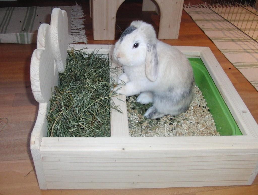 Что можно сделать для кролика декоративного своими руками