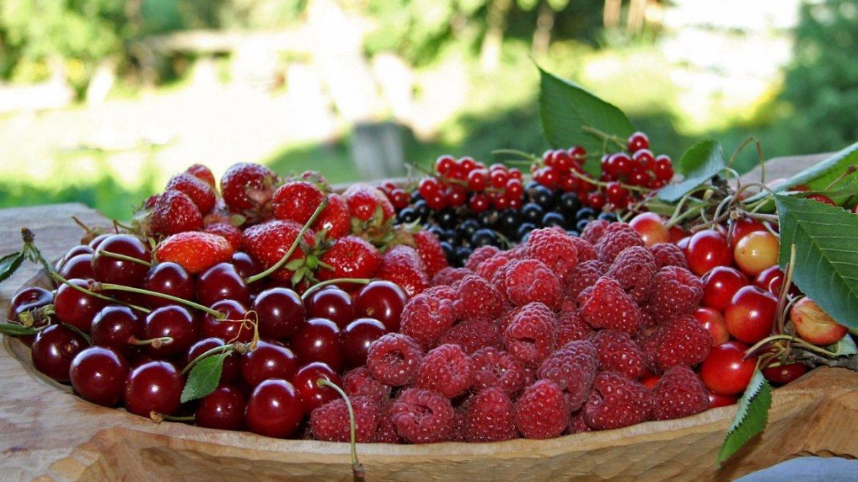 КОМПОТ ИЗ ЧЕРЕШНИ ПРИ ГВ - Можно ли кормящим пить вишневый компот, Портал интеллектуальной молодежи