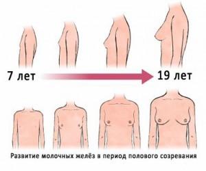 как растет у девчонке груд фотки