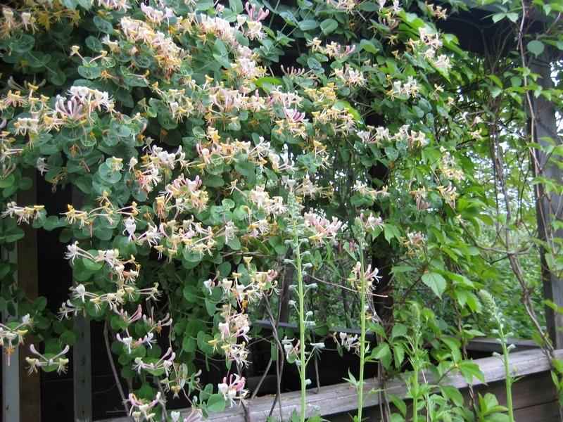 Изгородь для лианы