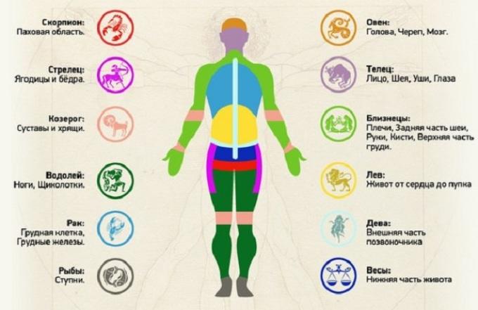 Соответствие частей тела знакам зодиака