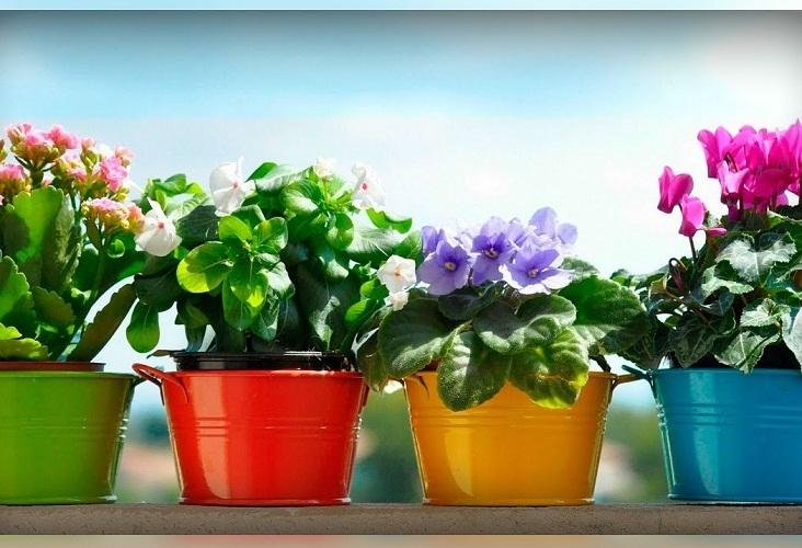Разные цвета фиалки по-разному влияют на нашу жизнь, но все они гармонизируют женское счастье
