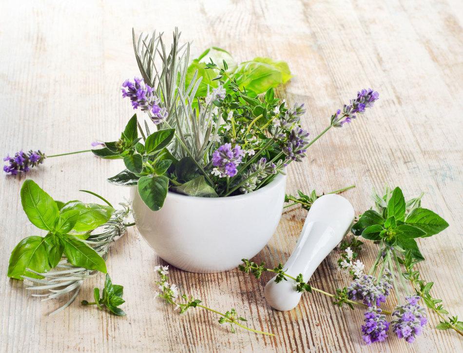 Какие травы для похудения купить в аптеке