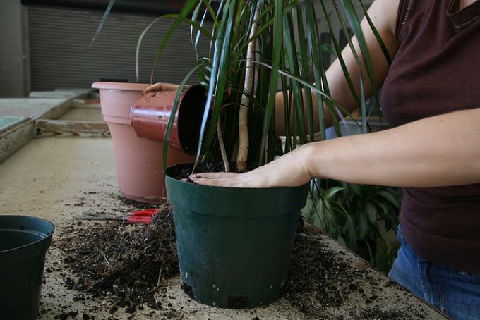 В какие горшки лучше сажать домашние цветы 42