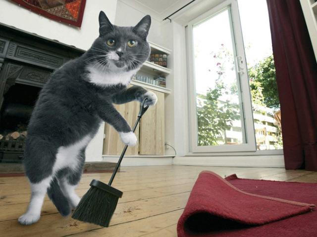 Как убрать запах мочи в квартире от кота