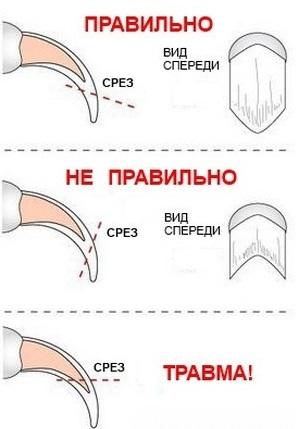 Обрезать когти коту домашних условиях