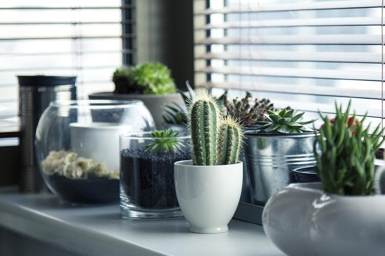 Кактусы и их родственники необходимы в доме с изобилием техники