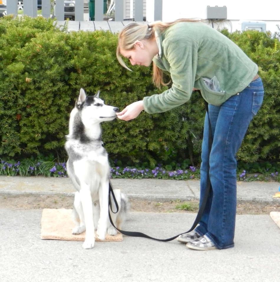 """Как научить щенка в домашних условиях команде """"ко мне"""": обучение и жесты"""