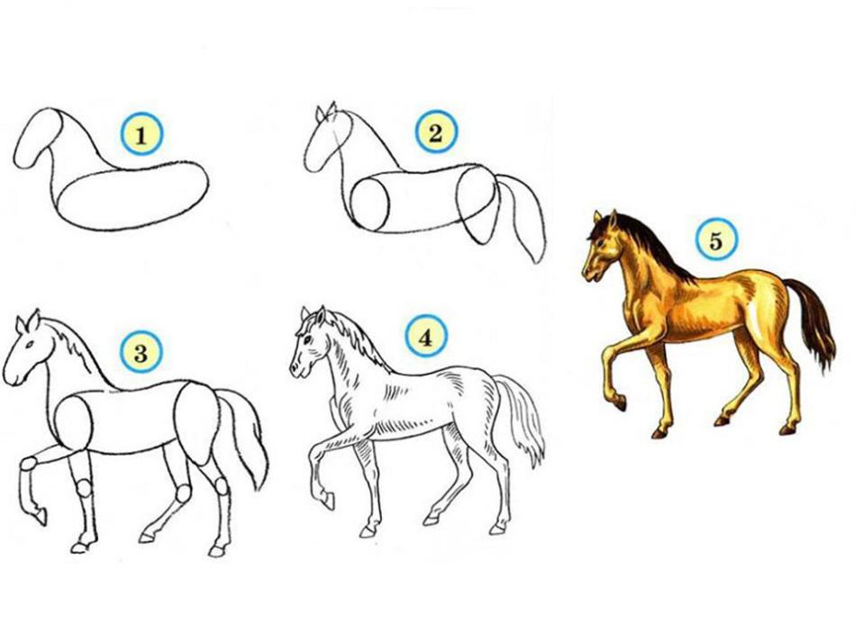 Учиться рисовать лошадь поэтапно