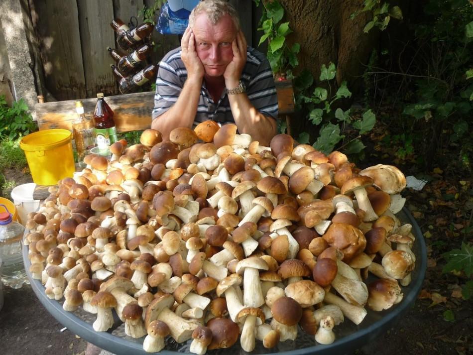 сколько надо варить белые грибы для маринования