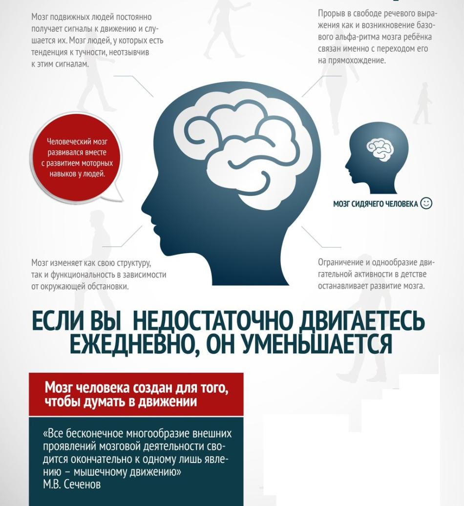 Мозг как мышцы