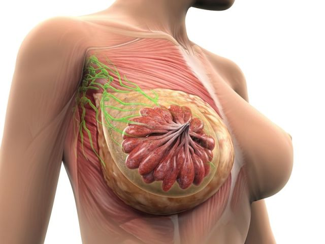 Почему набухают и болят молочные железы в середине цикла