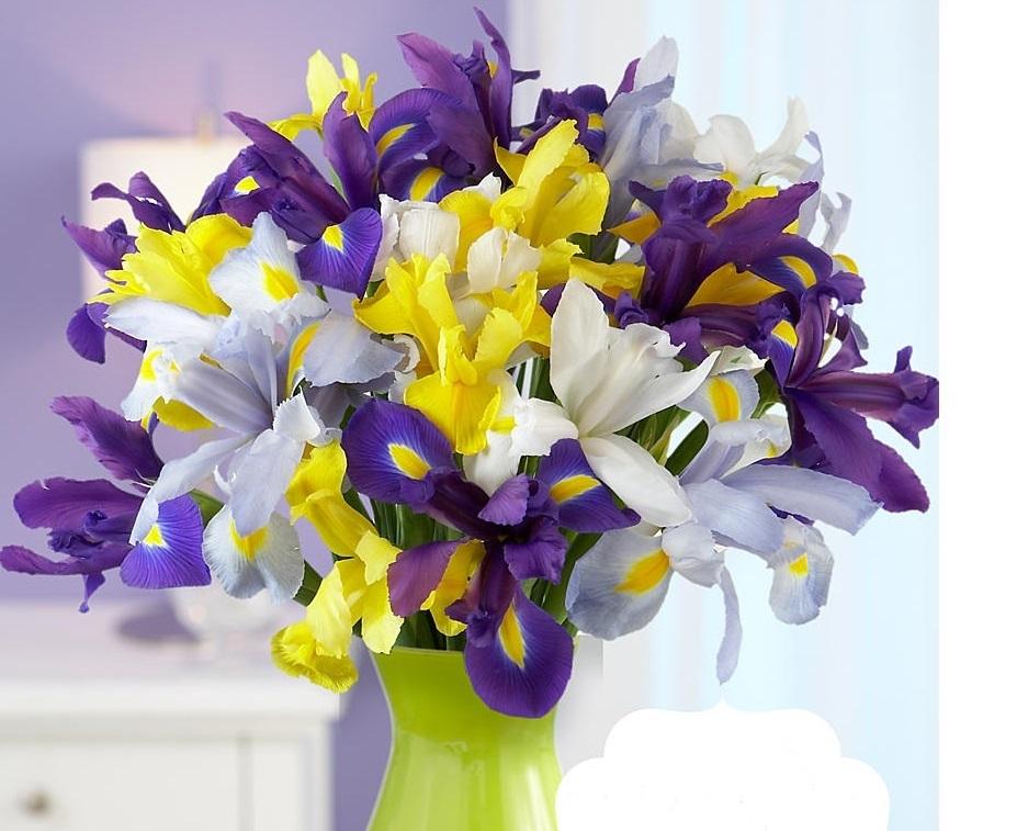 buket-iz-irisov-raznogo-cveta.jpg