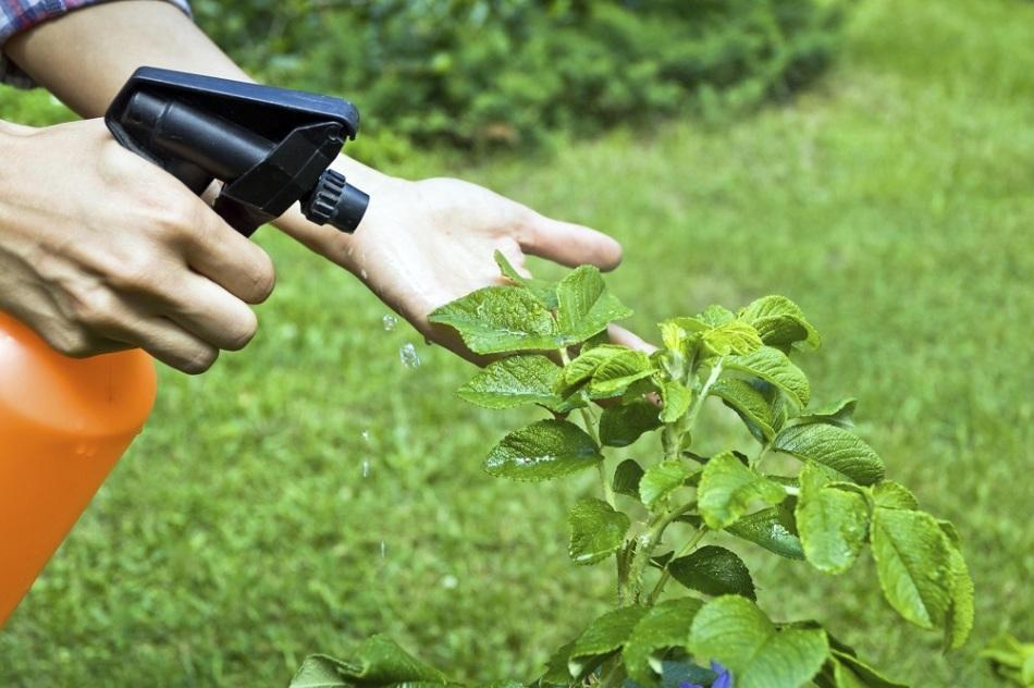 Применение янтарной кислоты для выращивания томатов, огурцов, картофеля и других овощей в огороде