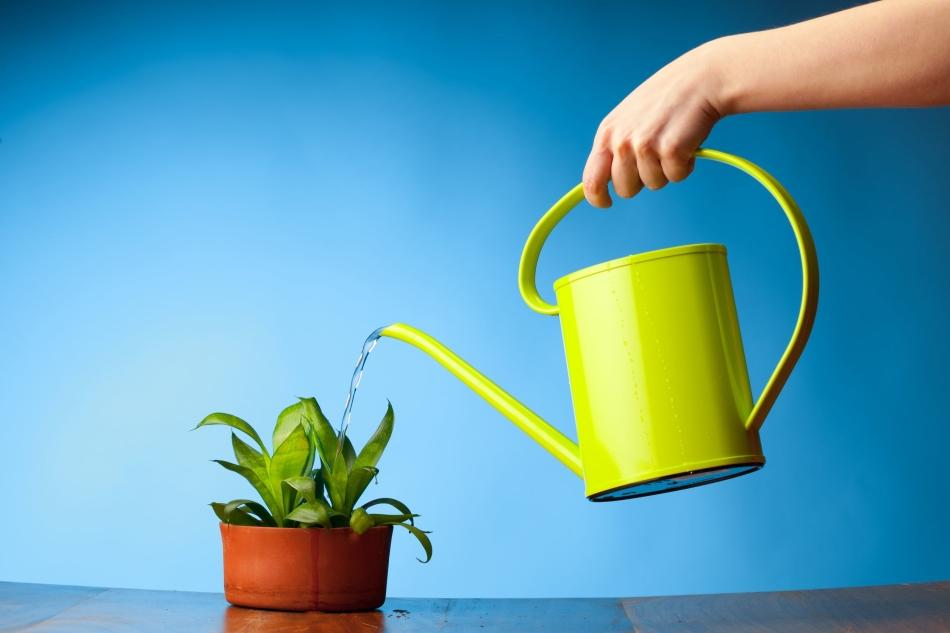 Почему нельзя поливать растения водой из под крана