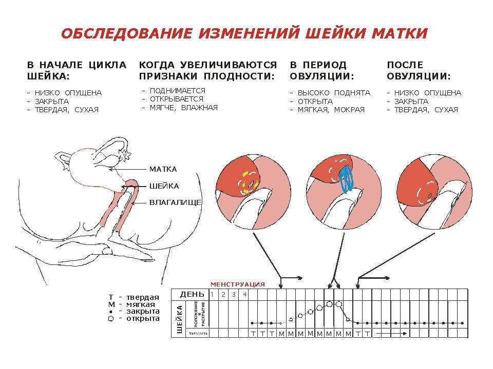 Признаки беременности 10 дней после овуляции