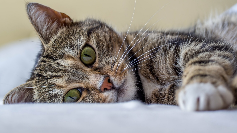 Примета кот нагадил на кровать