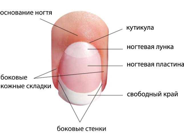 Диагностика по ногтевым пластинам на руках