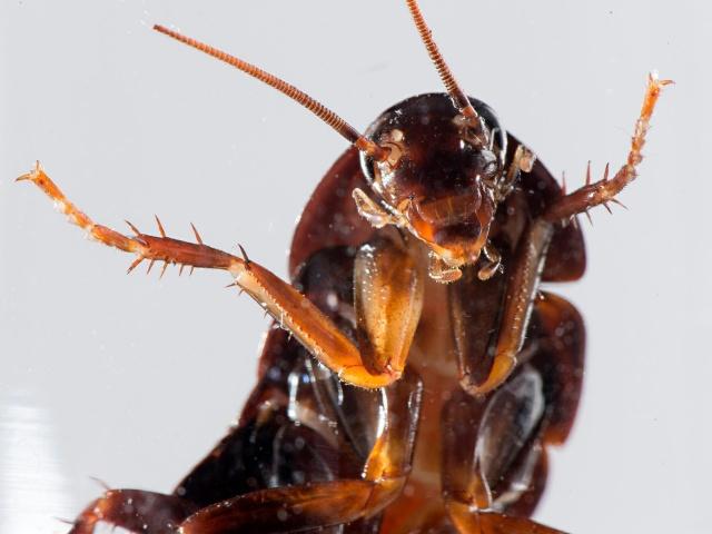 К чему снится тараканы червяки фото