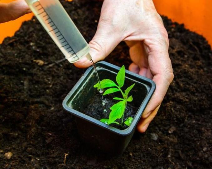 Народные подкормки для рассады томатов 455