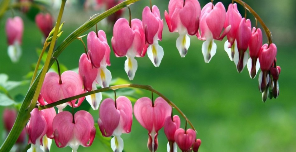 Прекрасной красоты цветок