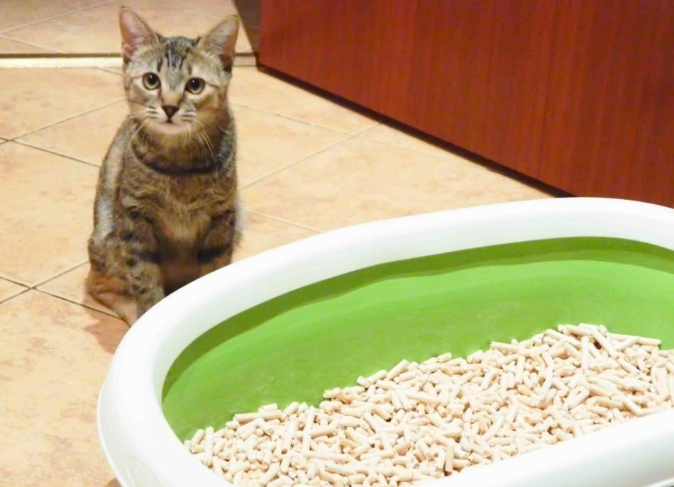 Наполнитель для кота в унитаз