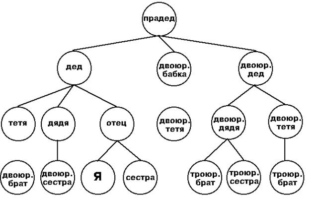 Как изобразить схему родословной Составление родословной в генетике. Правила