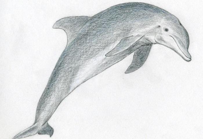 Чёрно белые рисунки дельфинов на стене