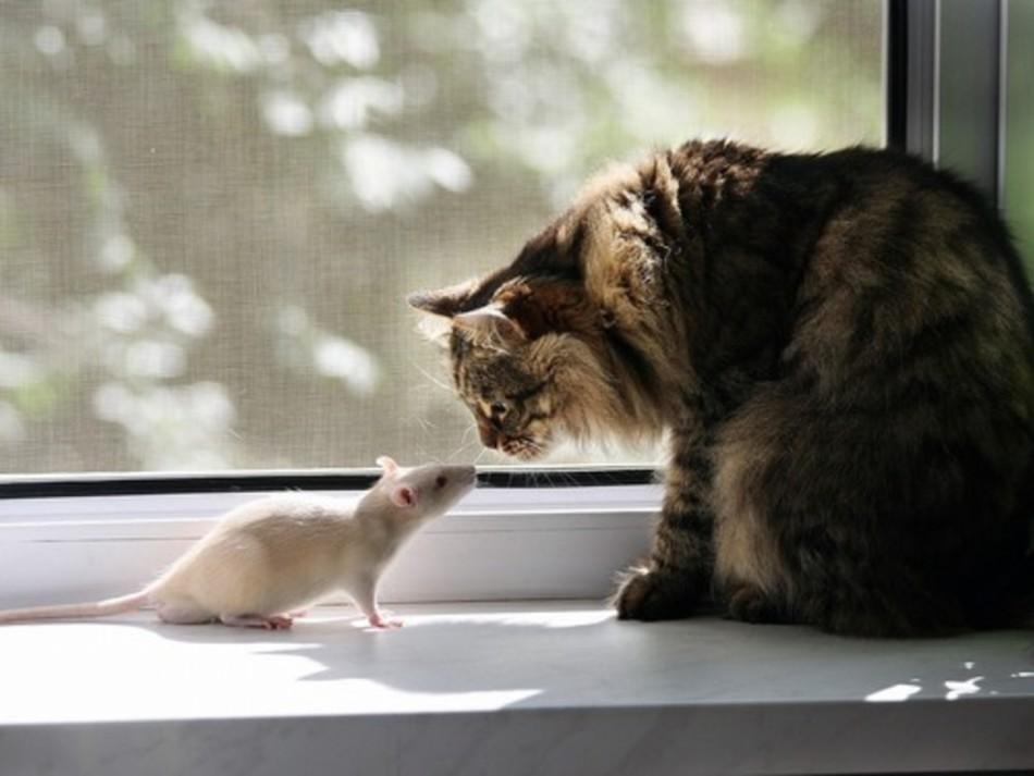 Снятся кот ловит мышь