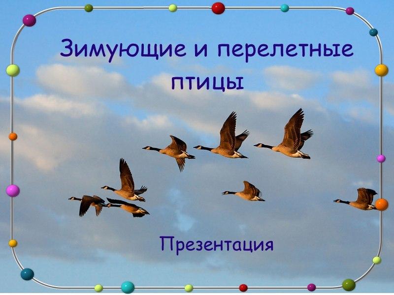 Зимующие и перелетные птицы: презентация для дошкольников