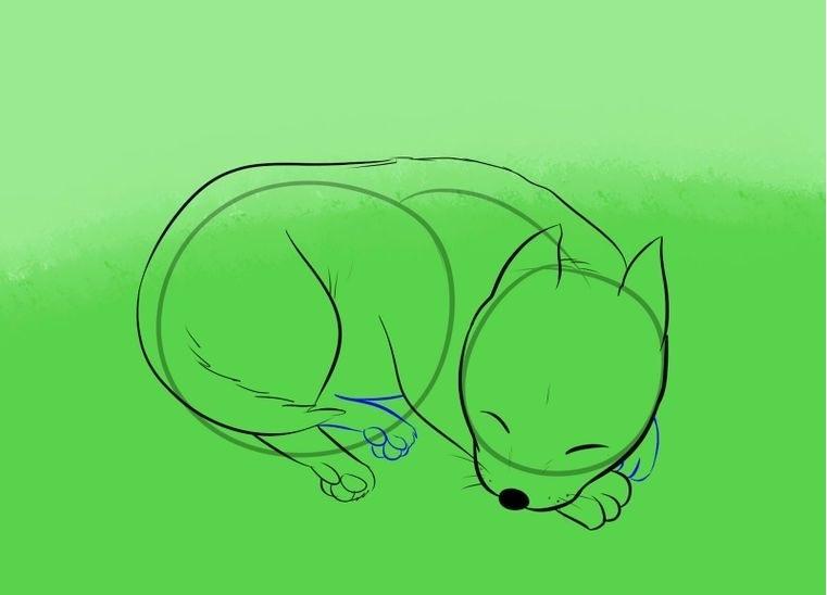 Поэтапное рисование спящей собаки: набросок — шаг 6