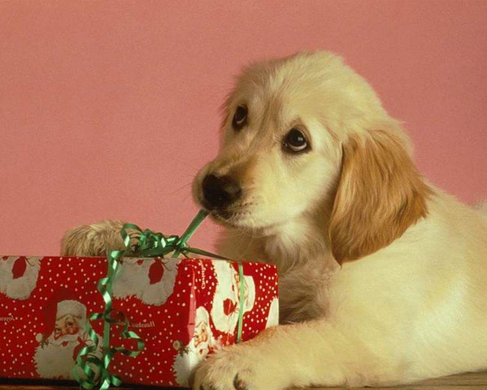 Подарю щенков собак