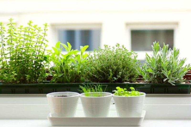 Для выращивания зелени в квартире 14