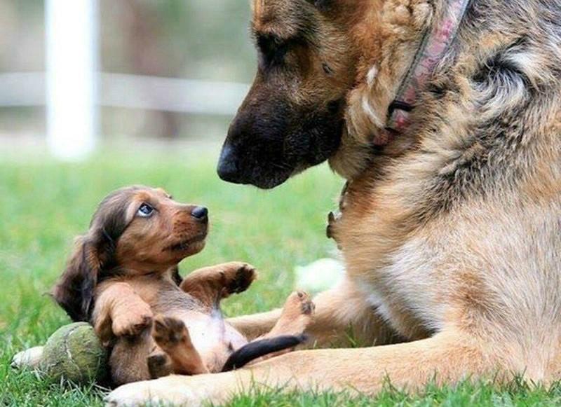 Страх у щенка