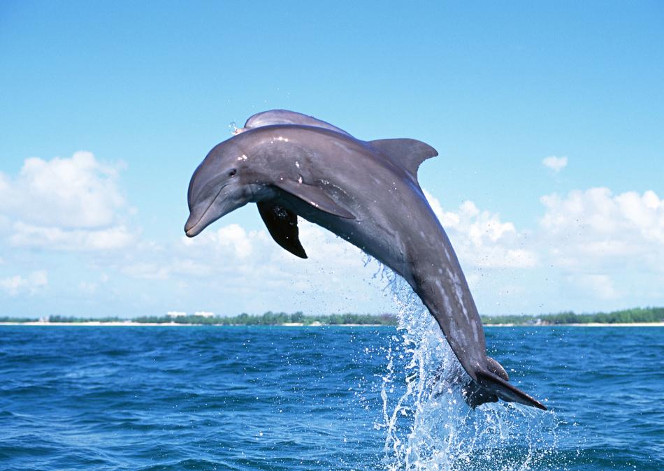 atelier du mal dolphin piercing bilder