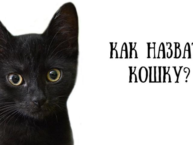Красивые имена для чёрного кота