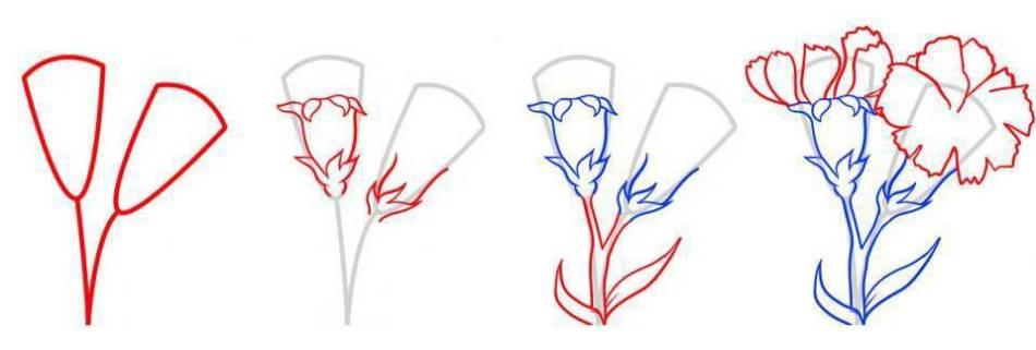 популярностью функциональностью как нарисовать поэтапно гвоздику отличие множества
