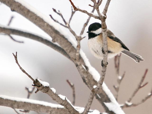 Какие птицы несъедобные птицы