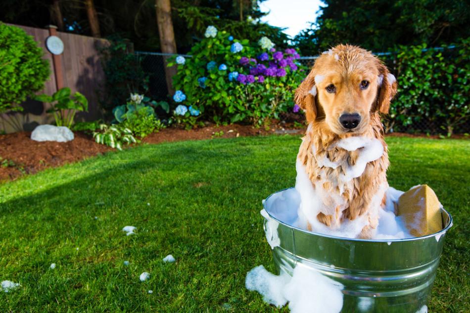Не стоит мыть домашних животных с мылом слишком часто