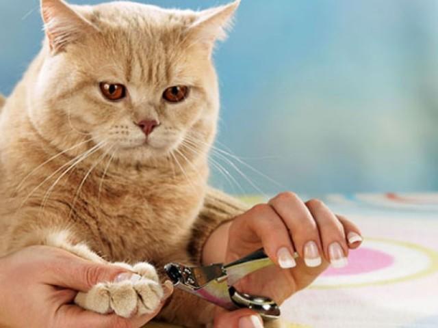 Как подстричь когти кошке в домашних условиях фото пошагово