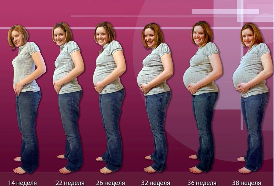 как растет живот у беременных по неделям фото