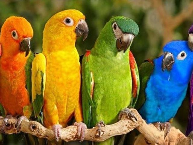Как по любимому цвету определить характер человека