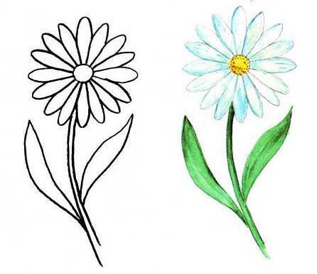 рисунок ромашки для детей картинки
