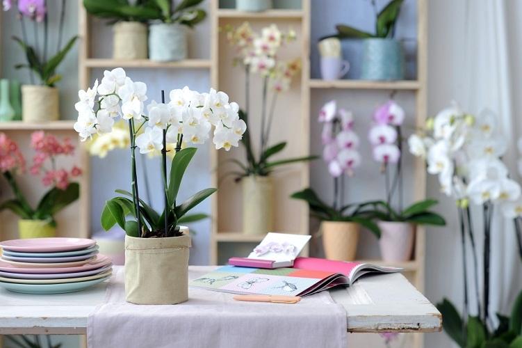 Цветы служат не только для украшения