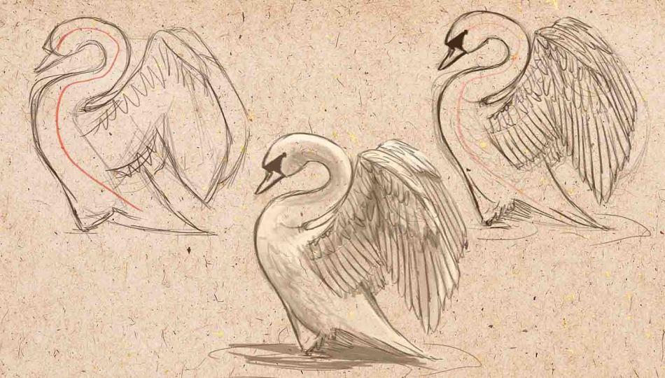 Swan pencil drawing