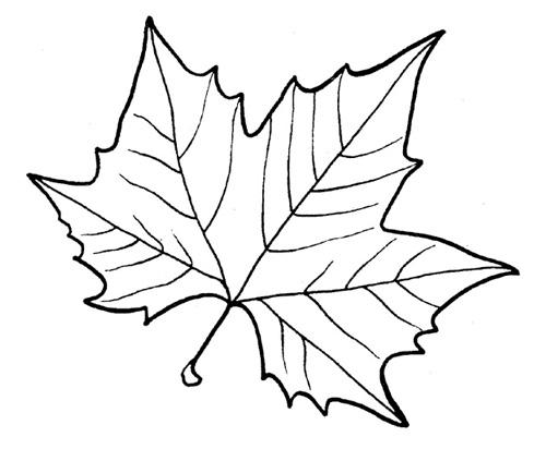 картинка листа кленового