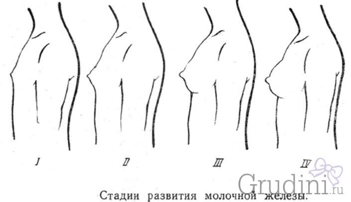 Как растет грудь